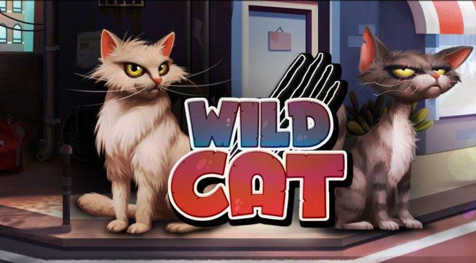Images of Wild Cat