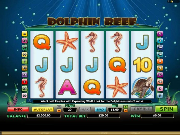 Images of Dolphin Reef
